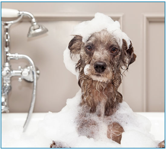 Office Cleaning Chester, North Wales & Surrounding Areas | SMClean NW | | SMClean NW | Dog Being Washed